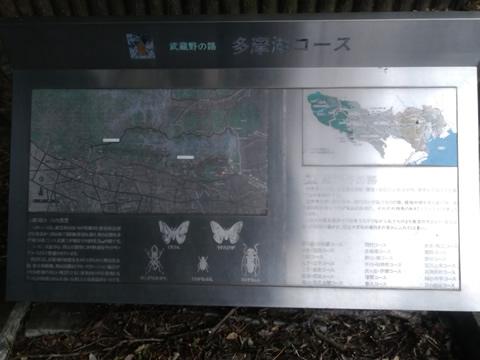 武蔵野の路 7.多摩湖コース