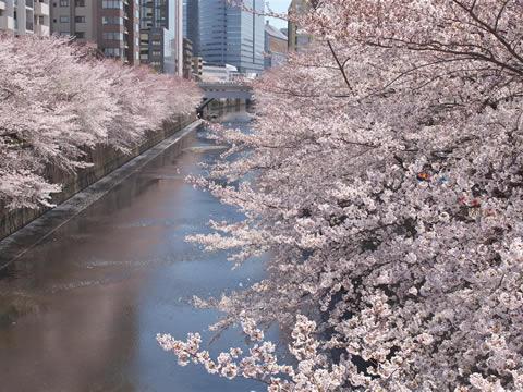 駅からハイキング 品川駅~高輪ゲートウェイ駅